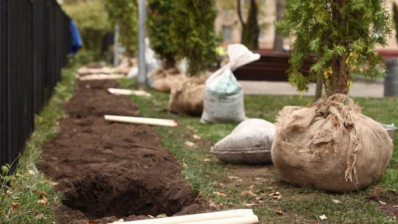 Неменее 37 тыс. деревьев высадили в столицеРФ всамом начале года
