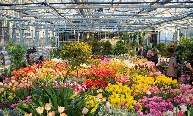 В «Аптекарском огороде» насеверо-востоке столицы расцвели тюльпаны исирень