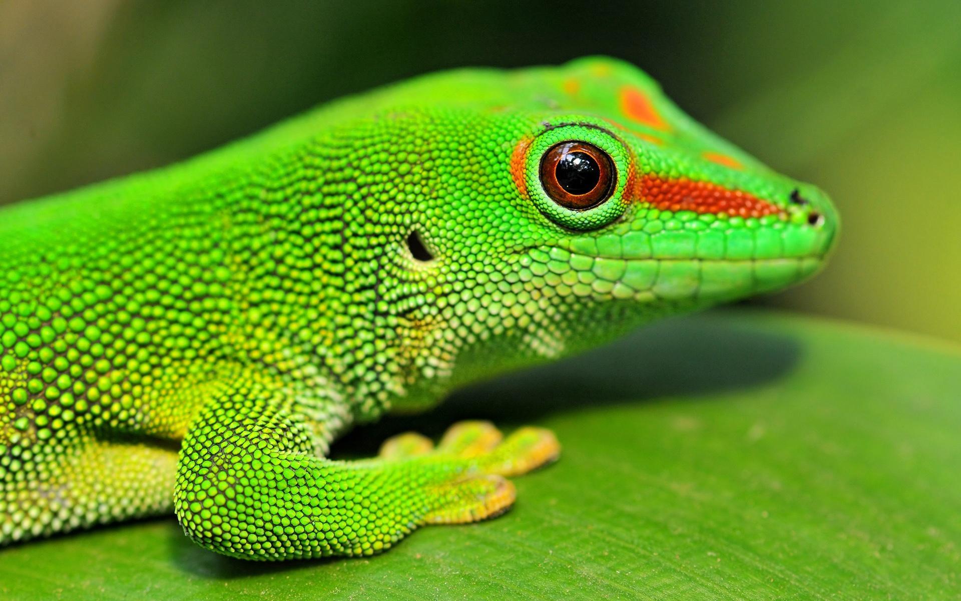 Изъятых уконтрабандистов рептилий покажут взоопарке
