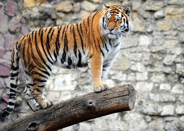 Московский зоопарк впервый раз проведет выездную экскурсию средкими животными