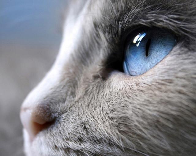 Женская ссора завершилась полетом кошки с12-го этажа в столице
