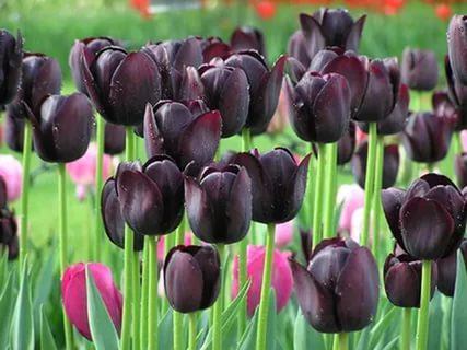Неменее 7 000 человек задень посетили «Репетицию весны» в«Аптекарском огороде»