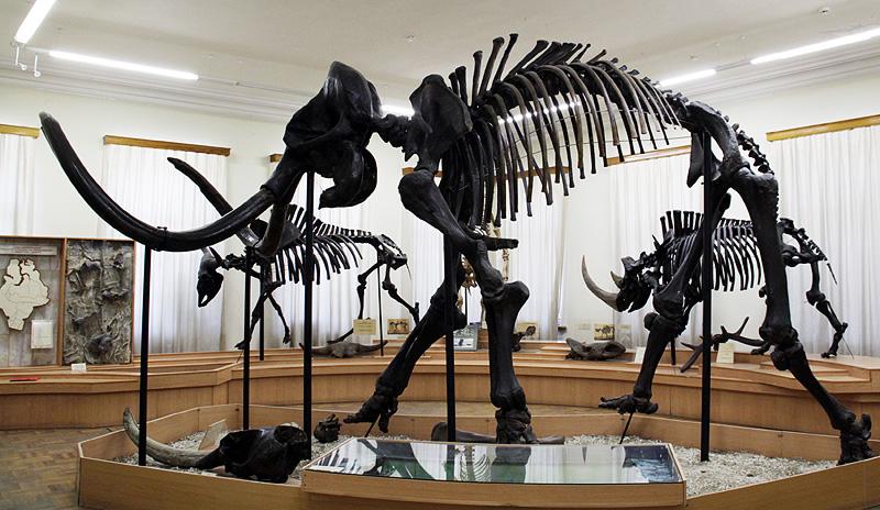 Вмузее Московского зоопарка покажут останки вымерших животных