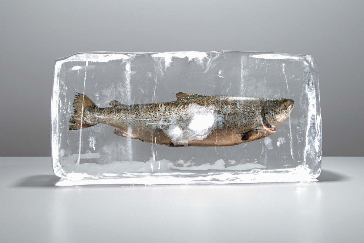 Сонник замороженная рыба в холодильнике