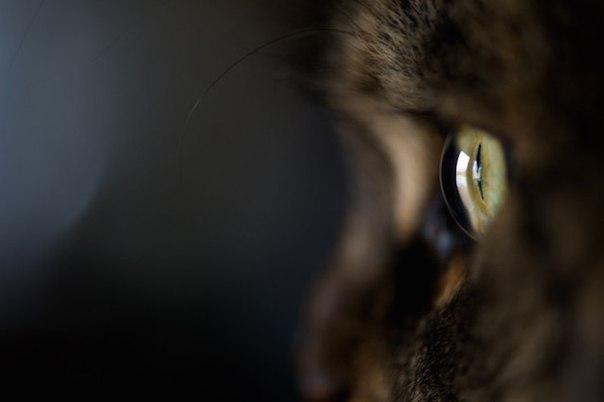 В российской столице cотрудники экстренных служб разобрали часть стены квартиры, спасая застрявшего кота