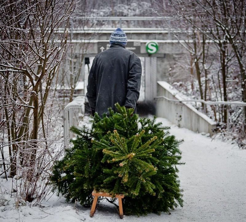 Отслужившие новогодние елки начнут принимать впереработку с9января