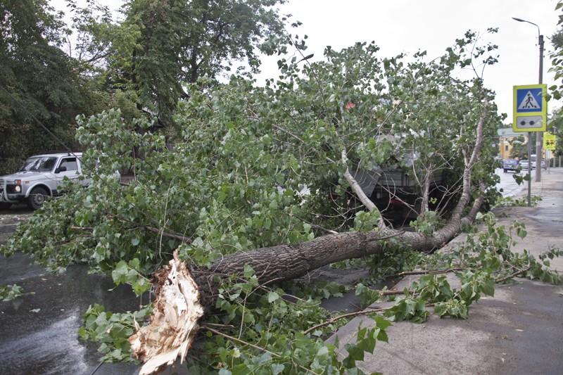 Вцентре столицы дерево упало на 4 легковушки