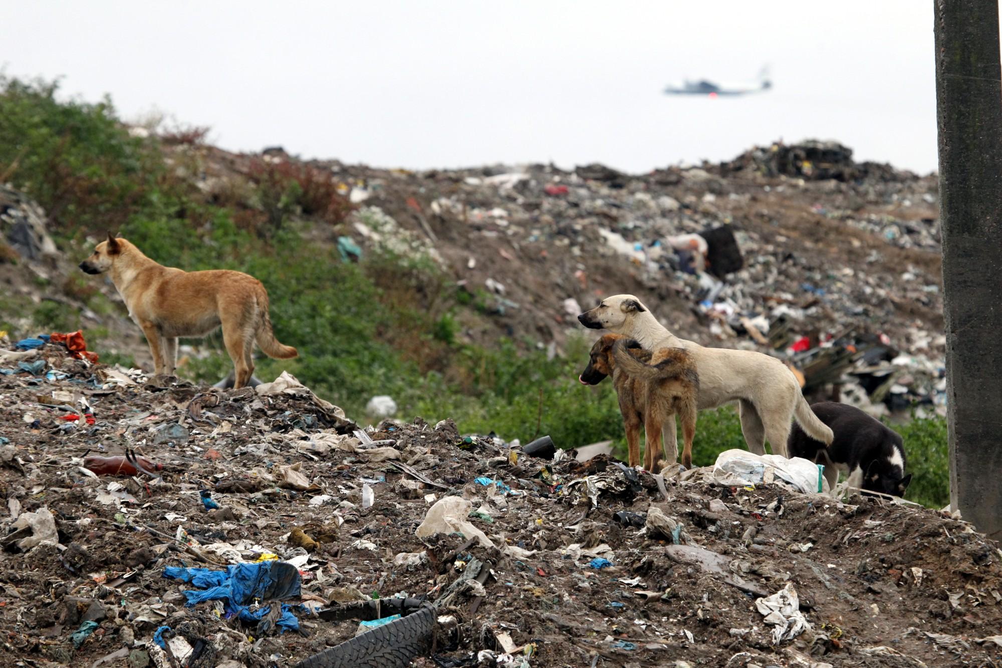 Подмосковье тонет вмусоре— Экологическая трагедия