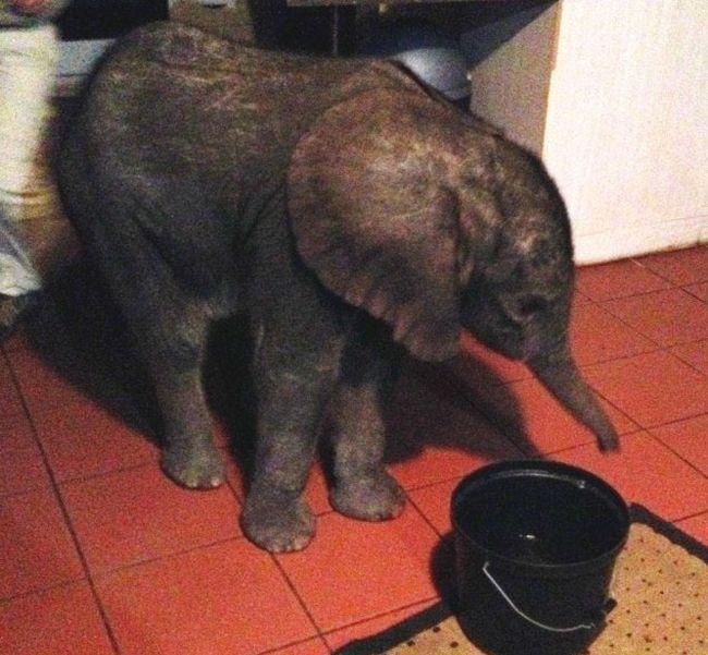 Народные избранники отыскали вмосковской квартире слона при работе над законом оживотных