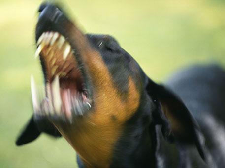 Сотрудник милиции спас отразъяренной собаки пожилую женщину