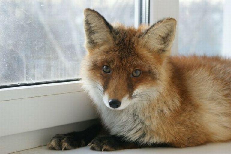 Москвичам разрешат держать диких животных вквартирах