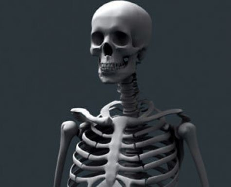 Скелет мужчины обнаружили вболоте насевере столицы