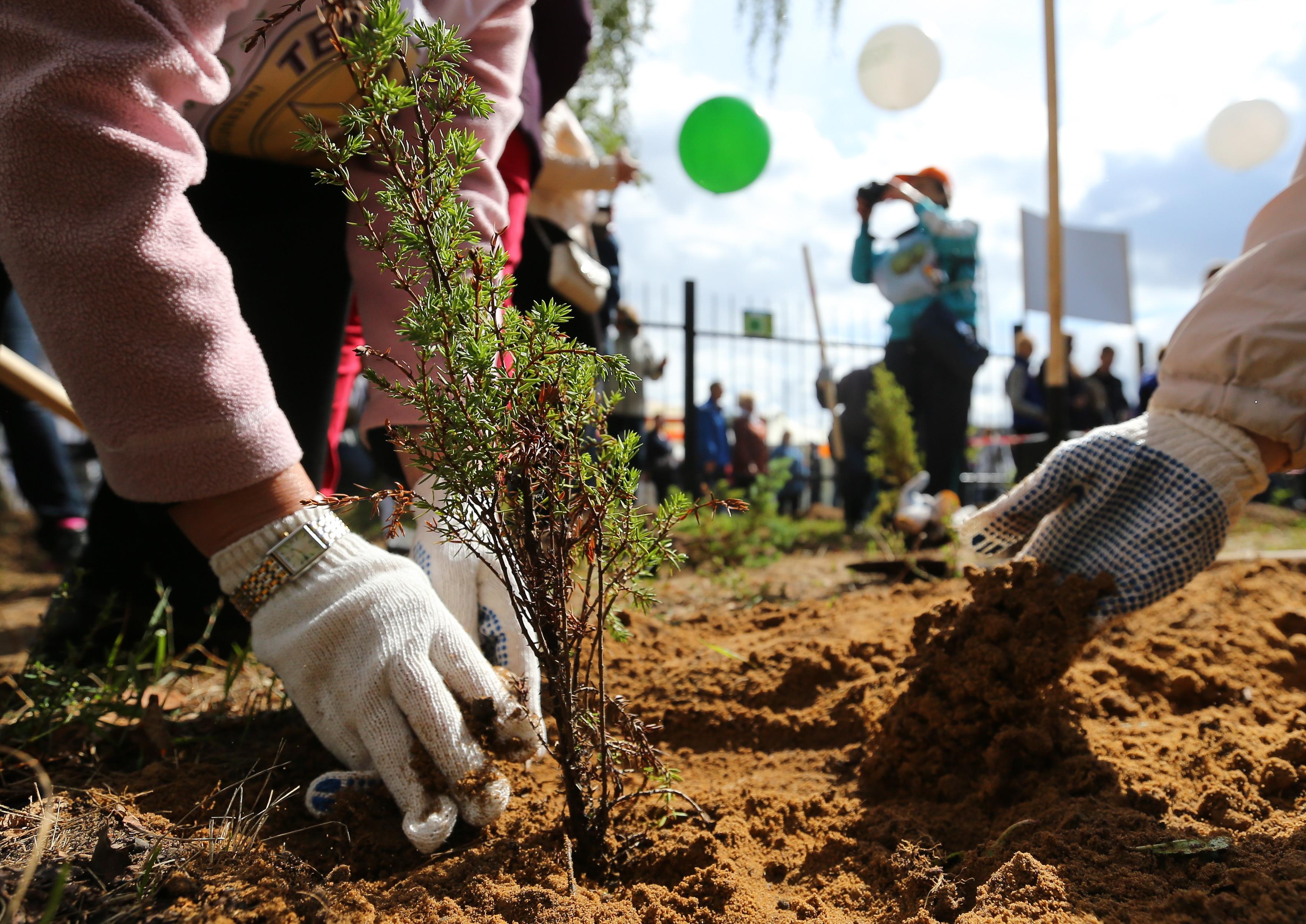 ВБибиреве иОтрадном стартовала осенняя высадка деревьев