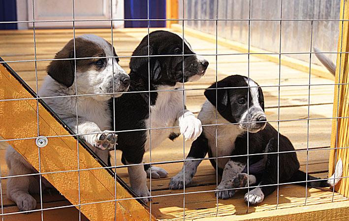 Впожаре встоличном приюте для бездомных животных погибли 13 собак