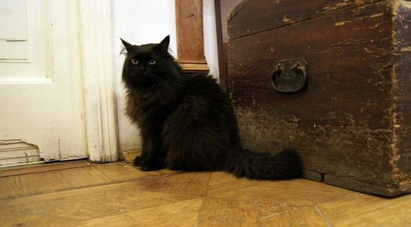 В «Булгаковском доме» сказали опохищении кота Бегемота