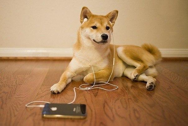Музыка стиля регги исофт-рок помогает собакам расслабиться— Ученые