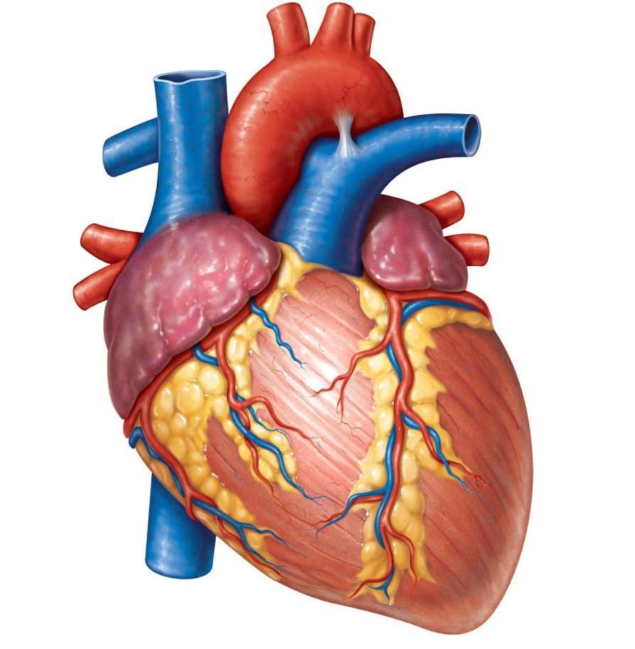 Излишнее опасение оздоровье чревато заболеваниями сердца— Ученые