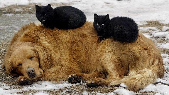 В РПЦ призвали стерилизовать бездомных собак и кошек